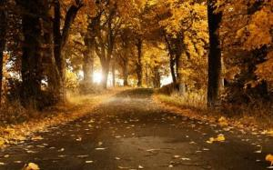 Autumn Breeze Wide HD Wallpaper